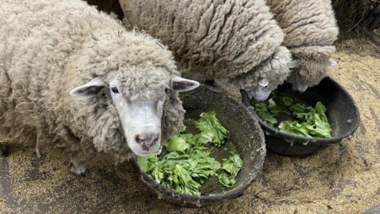廃棄野菜を飼育動物の餌として提供する食品ロス削減プロジェクト
